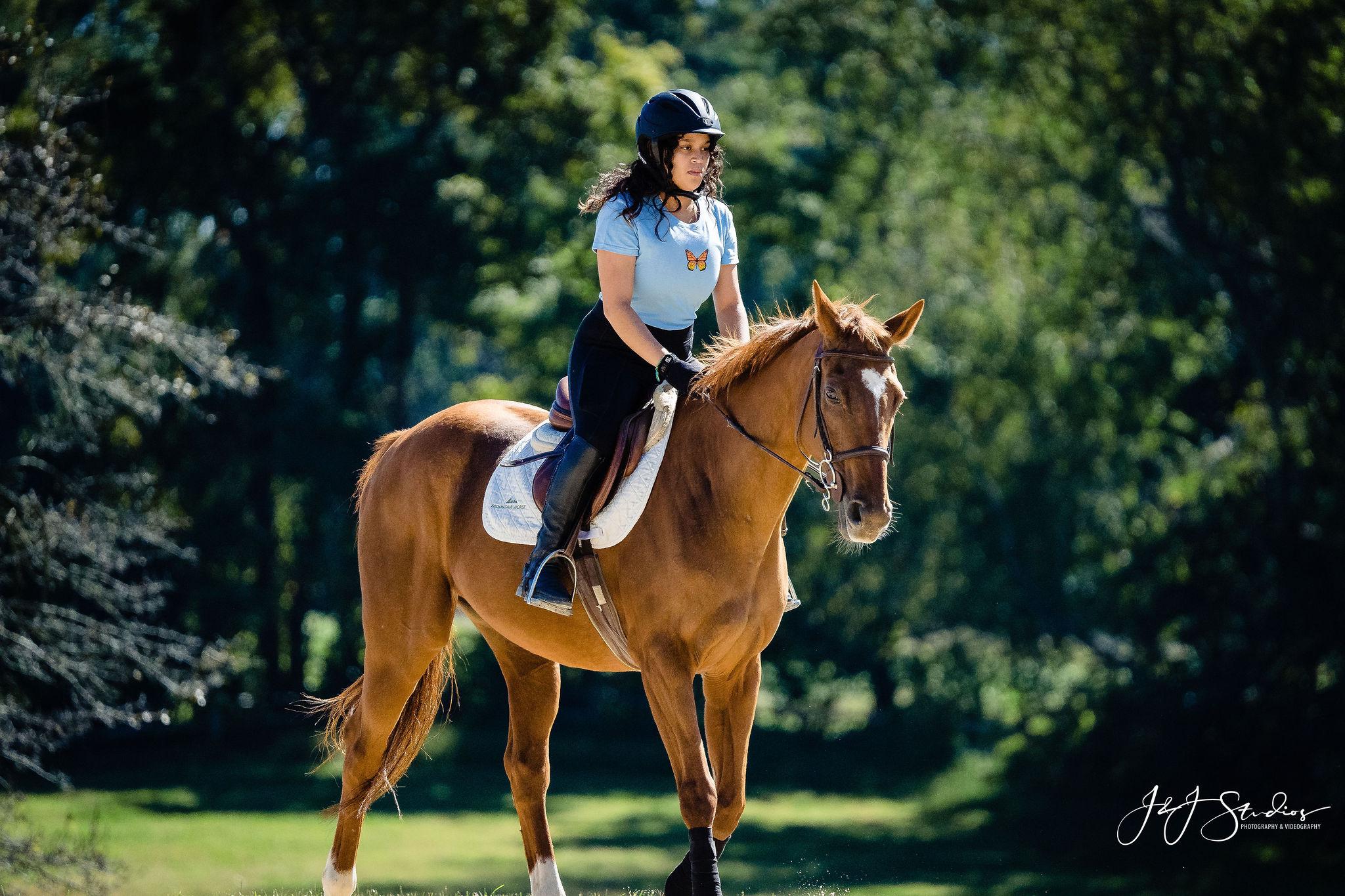 carismeldi horse grove