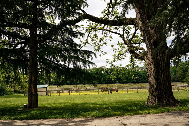 Horses field Bellevue Hall Shot by John Ryan